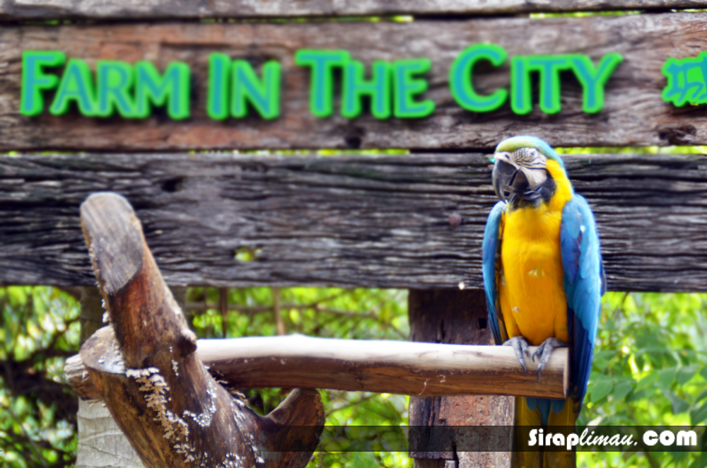 Farm In The City, Rasai Pengalaman Di Petting Zoo!